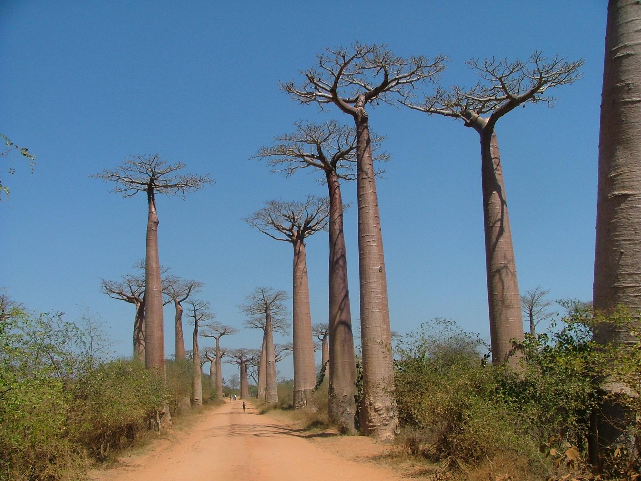 Madagascar s engage pour un tourisme durable l echo touristique madagascar tourisme - Office national du tourisme madagascar ...